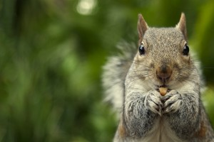 Squirrel-Photo-1